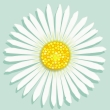 Drawn white daisy flower on light blue background facing the viewer.